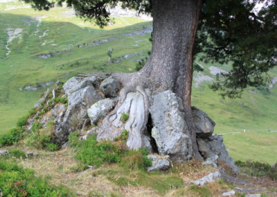 Kraft der Baumwurzel
