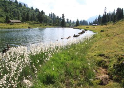 Blumen und Alpwiese um den See