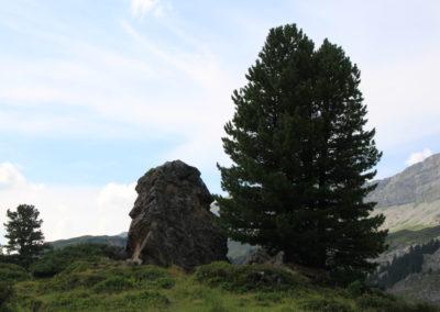 Stein mit Arve