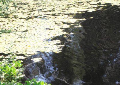 Blaetter im Wasser
