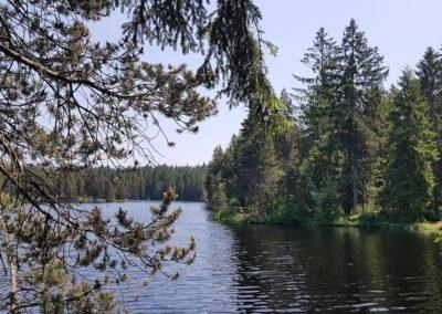 Etang mit Wald