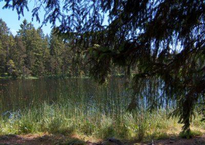 Ufer Moorsee
