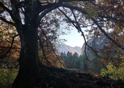 Abendstimmung mit Baum