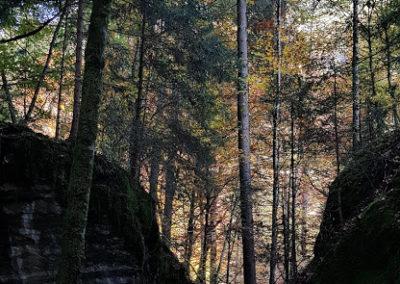 Blausee Rundweg