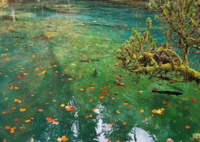 Forellen im Blausee